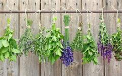Sal de Ervas: Benefícios, Receita e Como Fazer em Casa.