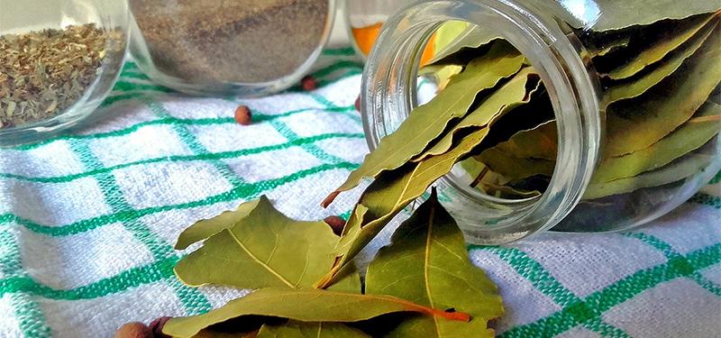 Folhas de Louro: Para Que Serve, Propriedades E Benefícios