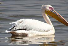 O que é fauna brasileira