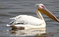 O que é fauna brasileira, Animais, Espécies e Regiões.