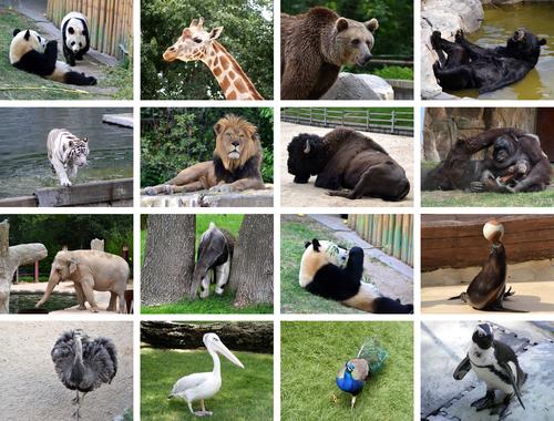 O que é fauna