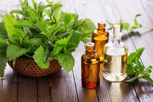 Benefícios do óleo de menta