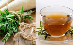 Alecrim: 10 Benefícios E Como Fazer O Chá