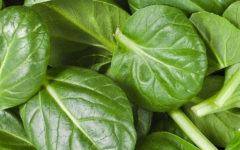 Benefícios do Espinafre para a Saúde.