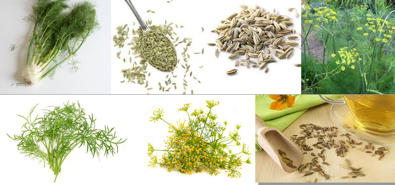 Chá de Erva Doce Indicação, Benefícios e Como Fazer.