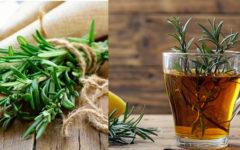 Chá de Alecrim → PARA QUE SERVE, Como Fazer e Contra Indicações.