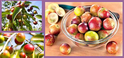 imagens de frutas exóticas
