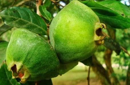o que são frutas exoticas