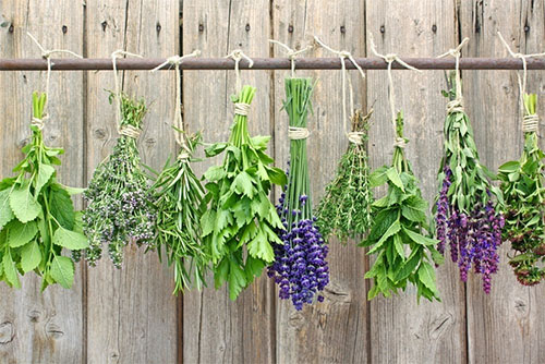 plantas medicinais e suas indicações