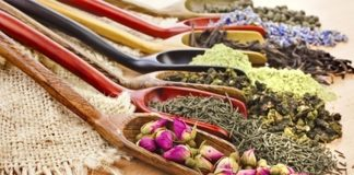 plantas medicinais para que serve