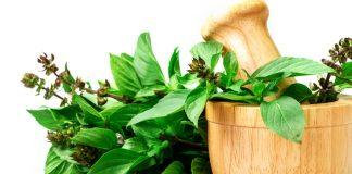 uso do chá de manjericão