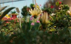 Flora: O Que É, Principais Árvores E Plantas do Brasil