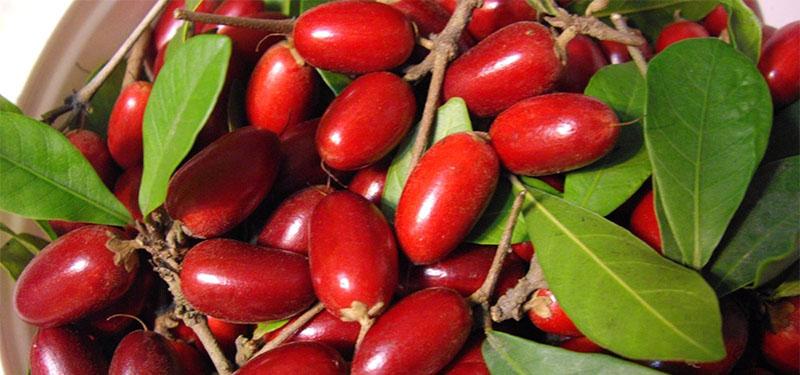 Benefícios da fruta milagrosa para a saúde!