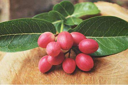 beneficios da fruta milagrosa para a saude