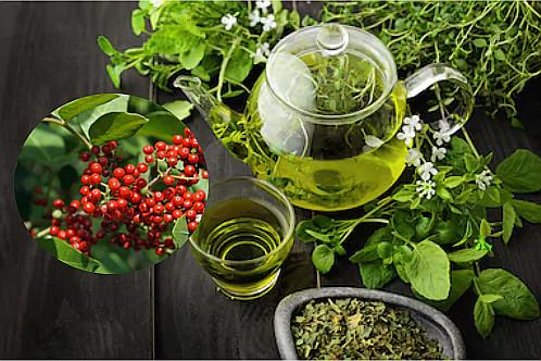 Benefícios do chá de aroeira