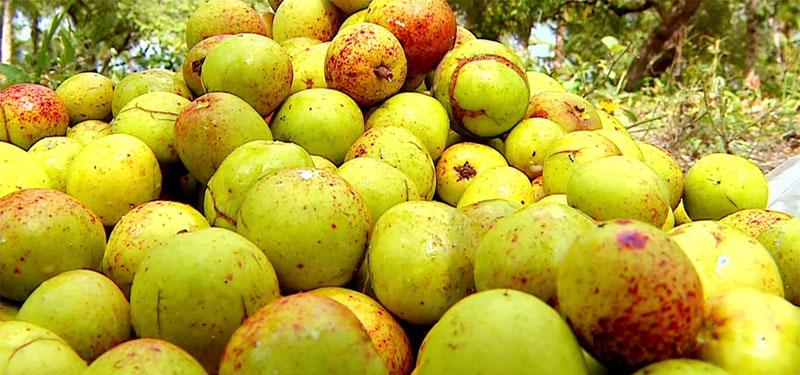 Para que serve a mangaba: benefícios da fruta!