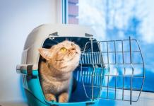 Transporte de animais - Conheça as regras